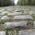 Paris-Roubaix er et av sykkelsportens aller hardeste ritt, og  sammen med Ronde van Vlaanderen den mest prestisjefulle klassikeren. I dag teller vi ned til morgendagens kraftprøve. Hvem tror du vinner? Hvilke sjanser har Thor og Edvald?
