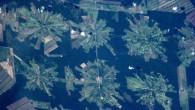 Stopp av avskoging og landskapsendringer er kanskje det mest effektive klimatiltaket i den brede landbrukssektoren som utgjør 25% av utslippene i verden årlig.